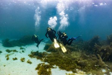 Salidas e Inmersiones