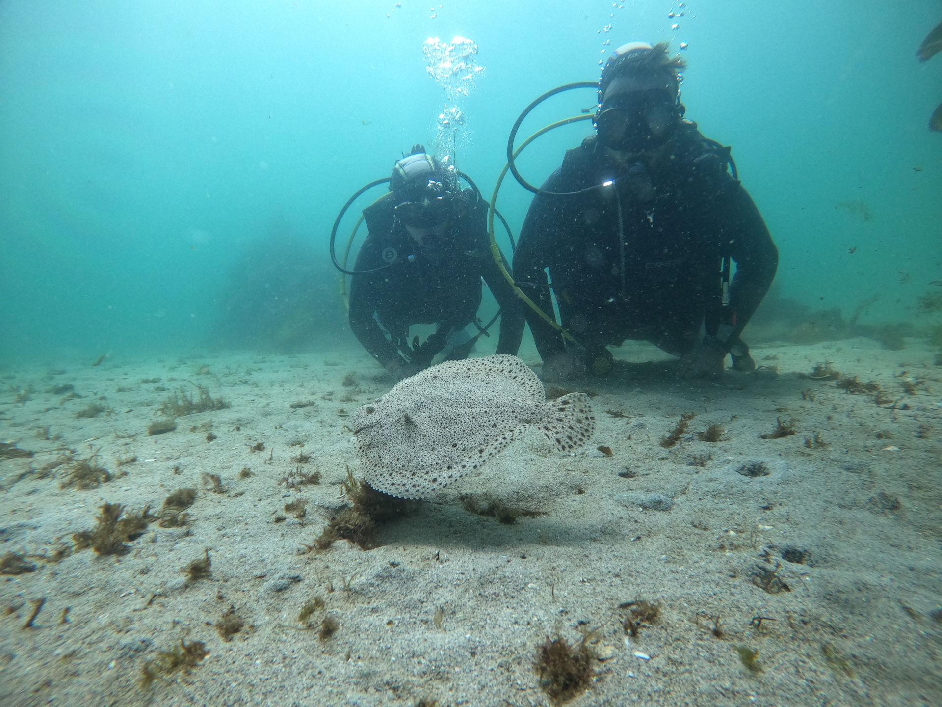 Bautismo de buceo o Diver Scuba Diving