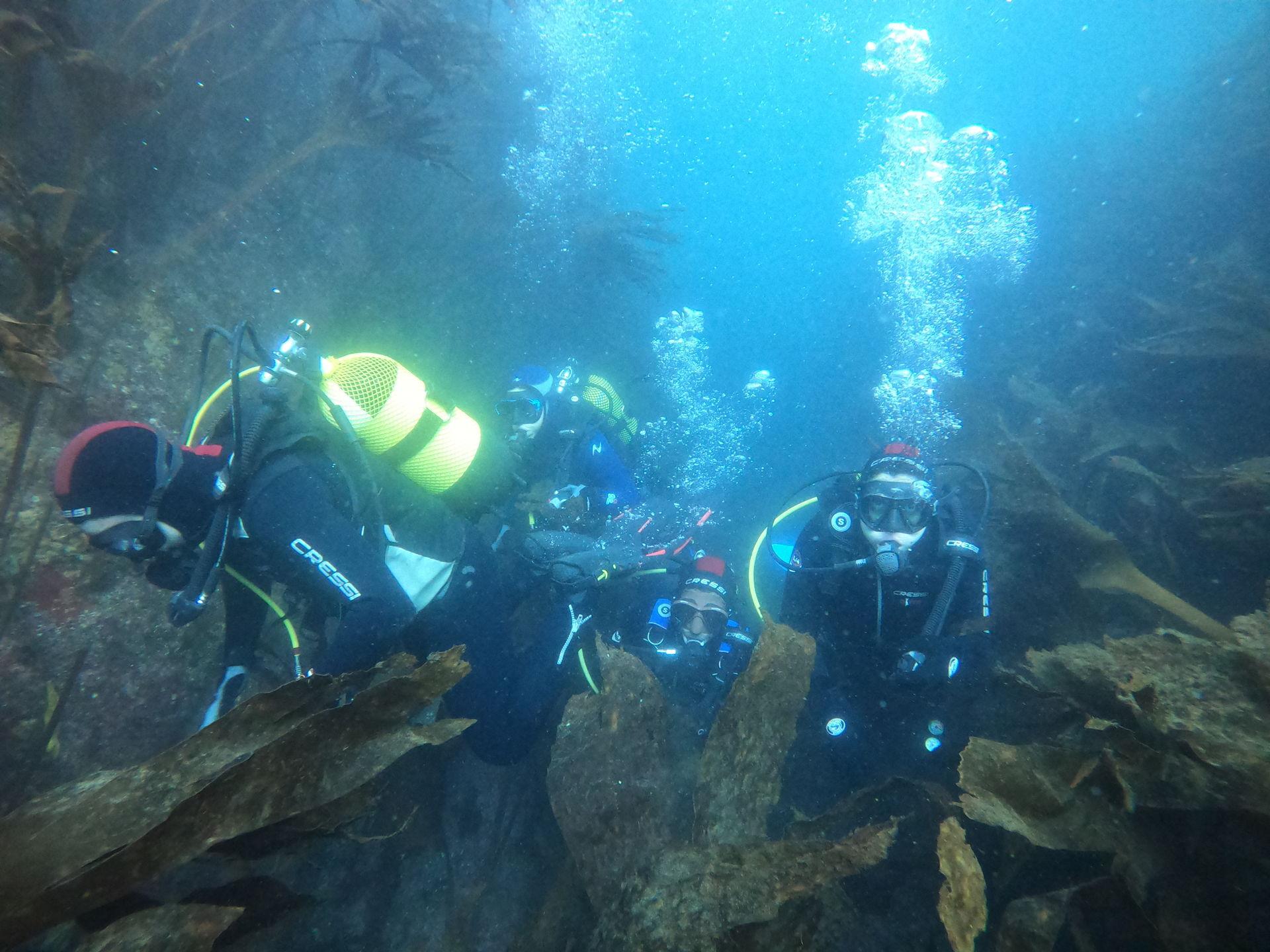 Iniciación - PADI Open Water Diver (OWD)